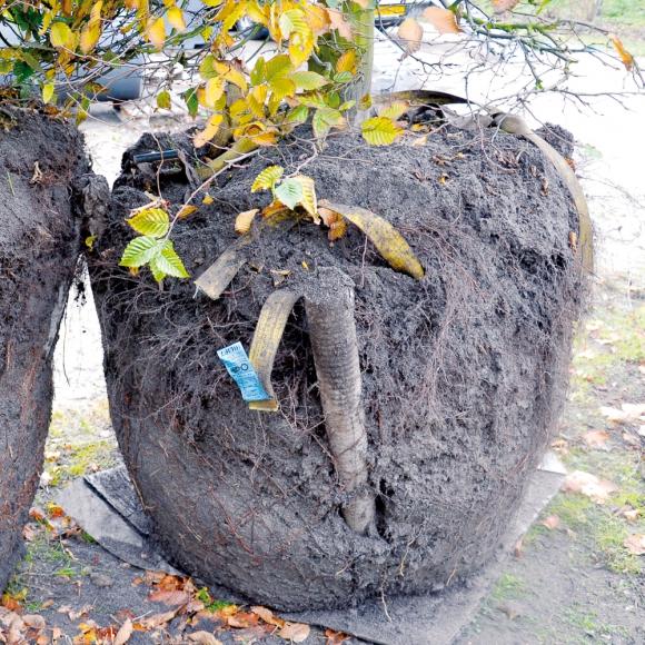 Treetec Bottom Up
